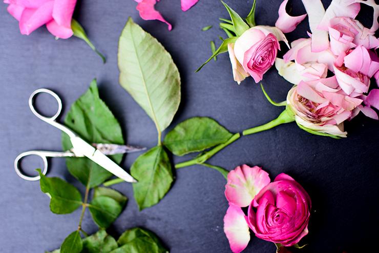 Zerschnittene Rose 1