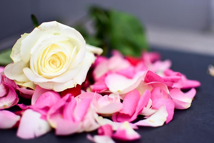 weiße Rose take