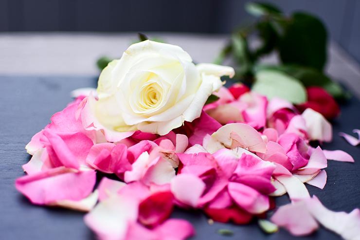 weiße Rose3