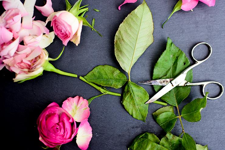 zerschnittene Rose Beitragsbild
