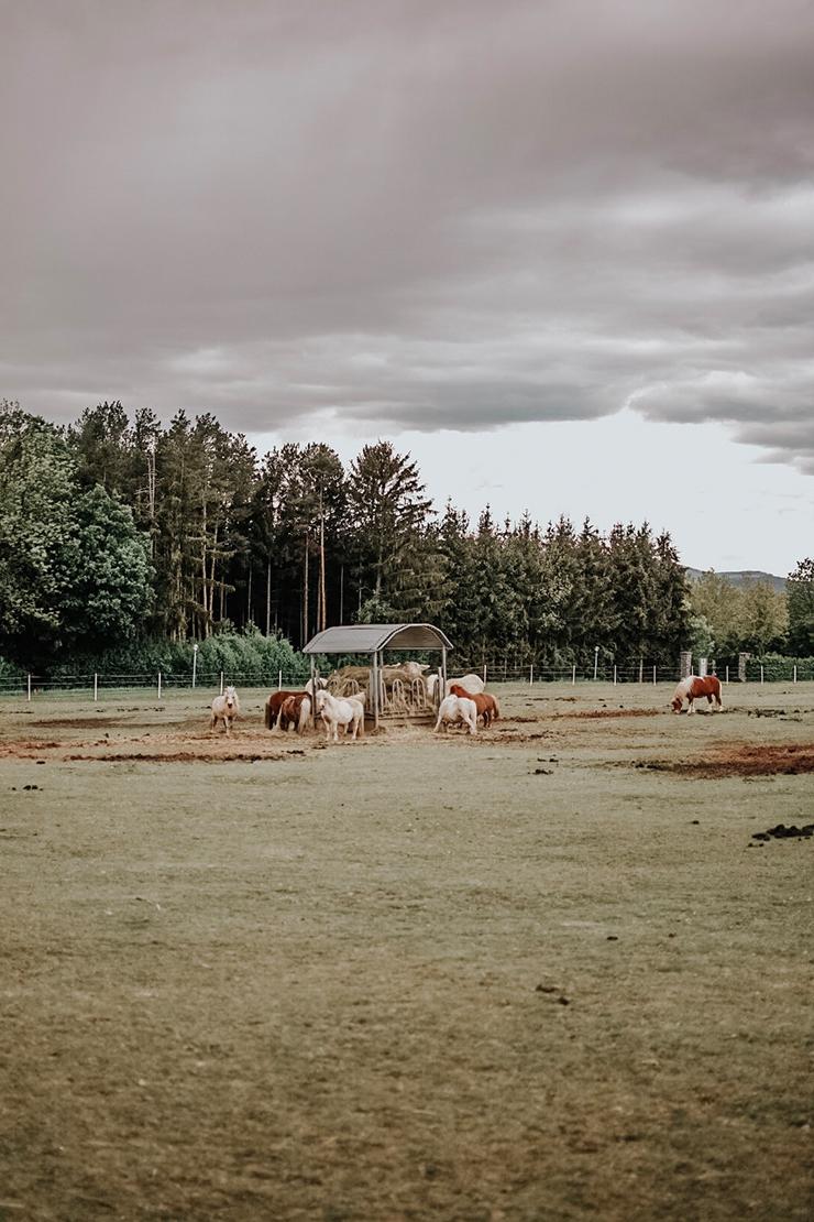 Muttertags Wochenende im Reiters Reserve