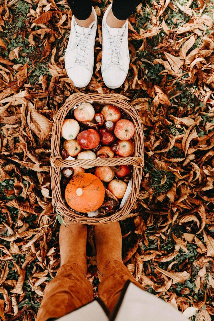 Fehler Anfängerfehler Blogposts Herbstkorb